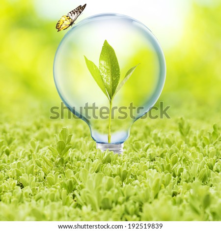 Light Bulb on green grass with plant inside and butterfly. Concept for Go Green and Ecology