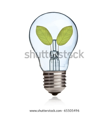 Light bulb with fresh green leaves inside isolated on white background