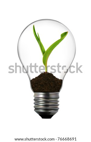 light bulb with green plant inside - stock photo