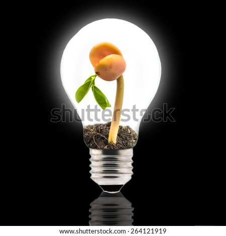 Light Bulb with growing sprout of tree seed inside isolated - stock photo
