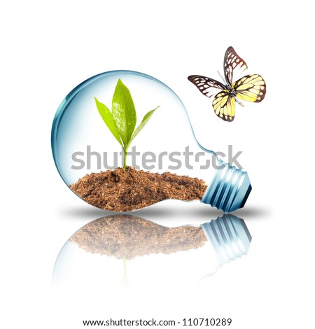 Light bulb with plant inside with butterfly