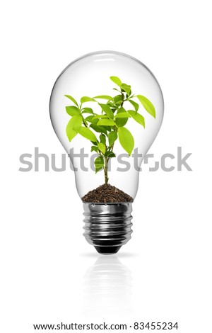 Light Bulb with sprout inside isolated - stock photo