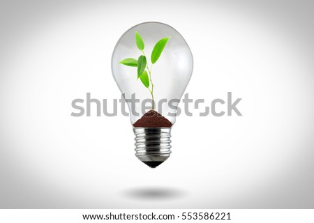 Light Bulb with sprout on a white background
