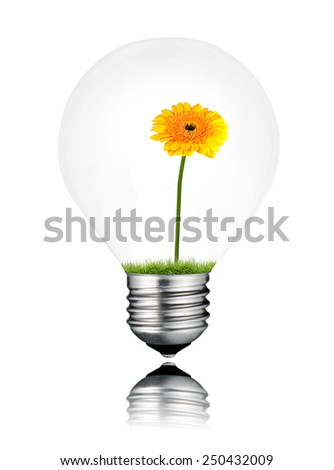 Light Bulb with Yellow Gerbera Flower Growing Inside Isolated on White Background. Light bulb has a reflection - stock photo