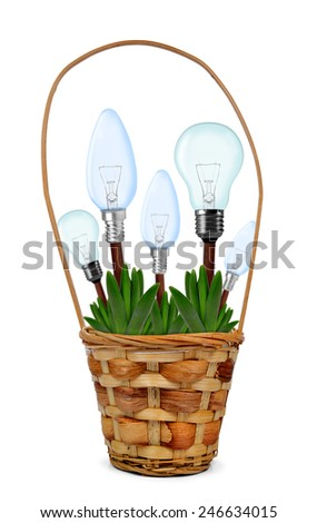Light bulbs on plant in pot isolated on white - green energy concept - stock photo