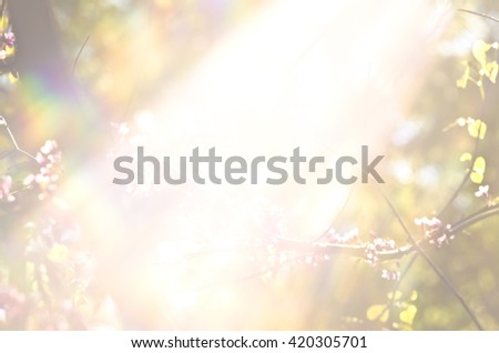 Light burst among trees. Rays of the sun in the garden. The bright sunlight between the forest branches. Tree leafs and flowers at under sun rays. - stock photo