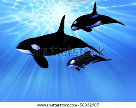 LIGHT ECHO - A mature male Orca whale swims with a juvenile and baby whale in this family group. - stock photo