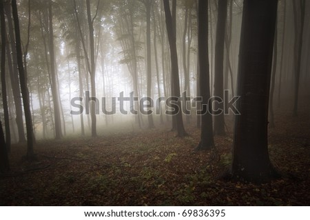 light entering a mysterious forest with fog - stock photo