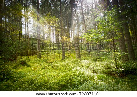 Light flooded the Forest