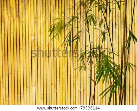 Light Golden bamboo Background great for any project. frame of bamboo-leaves background. - stock photo