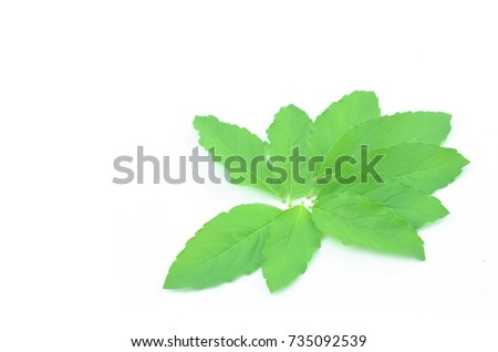Light green basil leaves on a white background.