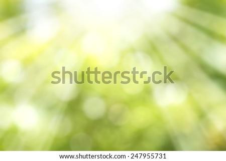 Light green bokeh - stock photo
