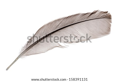 light grey feather isolated on white background