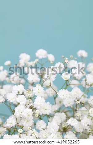 Light gypsophila (baby's-breath) flowers - stock photo