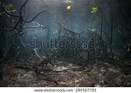Light illuminates the specialized roots of a mangrove forest in Raja Ampat, Indonesia. This remote tropical area harbors some of the Coral Triangle's most healthy marine habitats. - stock photo
