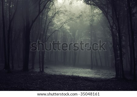 Light in a dark forest creating a frame - stock photo
