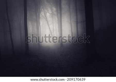 light in a dark spooky forest - stock photo