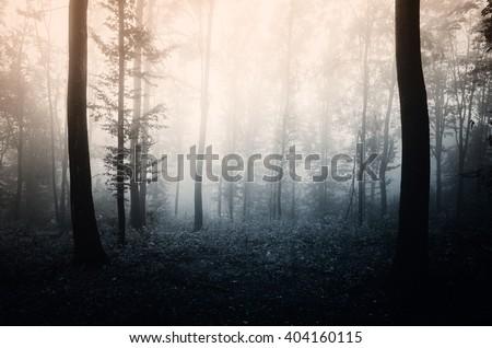 light in dark forest - stock photo