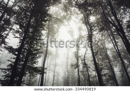 light in misty forest - stock photo