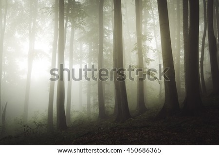 light in misty forest