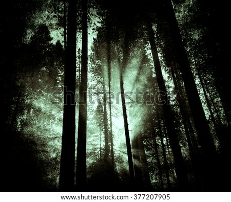 Light In The Forest, Sunset View, Beautiful Nature Landscape