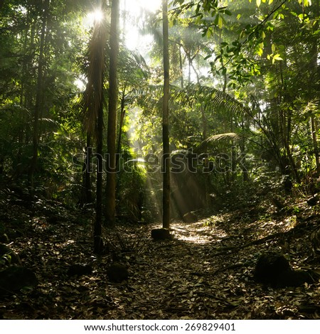 light is coming through trees in the jungle - stock photo