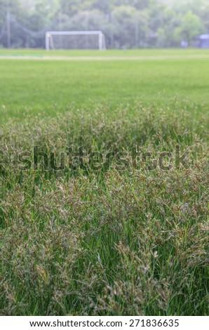 Light of green grass - stock photo