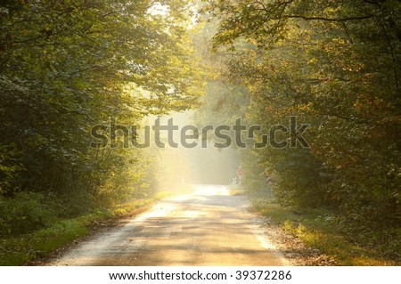 Light of the setting sun falls on autumn forest road surrounded by oak trees. - stock photo