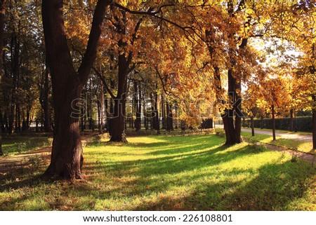 light rays fall landscape trees - stock photo