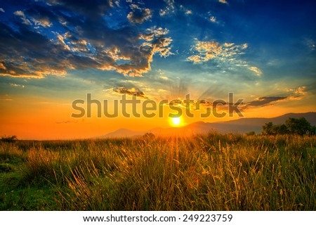 Light rays filling up the sky in an orange summer field. - stock photo