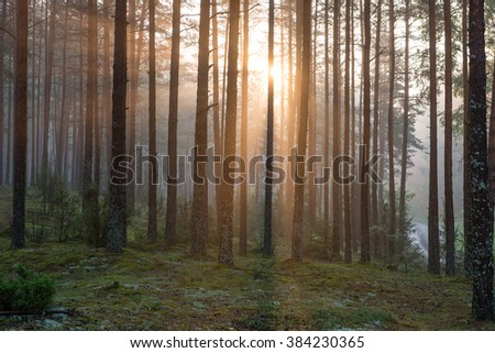 Light rays in forest in foggy morning in countryside - stock photo