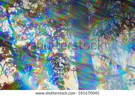 Light rays spectrum colors and tree branches on a sunny day. Abstract forest reflections through vintage prism filter. - stock photo