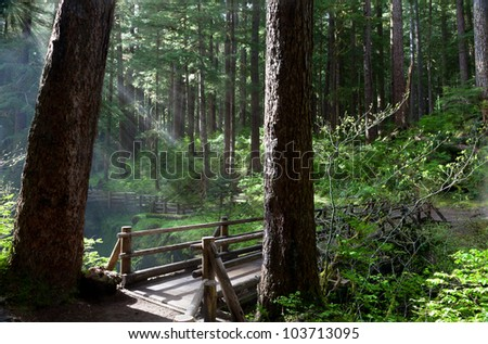 Light rays through forest, Sol Duc River Bridge, Olympic National Park, WA - stock photo