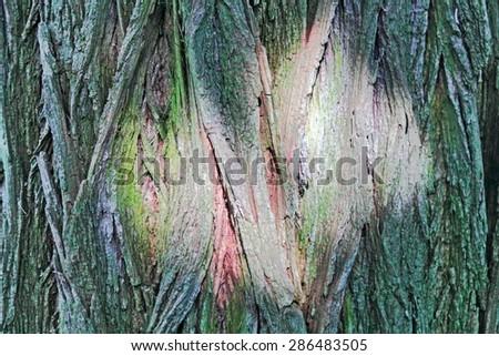 Light reflex on tree bark - stock photo