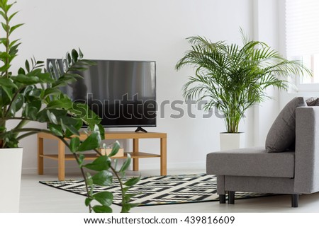 Light room with tv, sofa, pattern carpet and green plants - stock photo