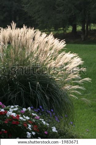 light shining through decorative grass - stock photo