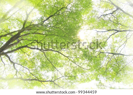 light shining through the forest in early morning. - stock photo