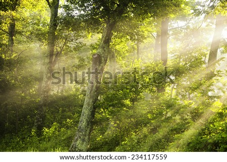 Light Shining Thru - Morning mist and a low morning sun combine in a dramatic way in the woods - stock photo