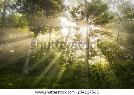 Light Shining Thru - Morning mist and a low morning sun combine in a dramatic way in the woods
