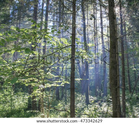 Light smoke in the forest of Eastern Europe