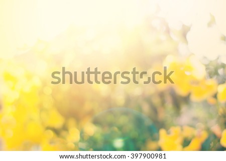 Light Summer Blossoming Natural Bush Flower Bokeh Background Yellow Color  - stock photo