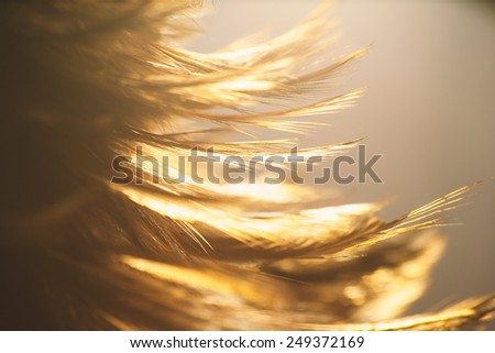 Light with a feather. - stock photo