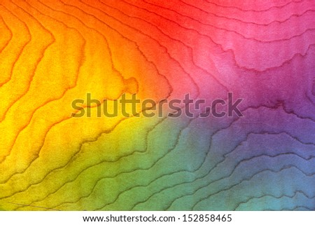 Light Wood Background Texture Curly Maple, Flame Pattern, Figured Lumber Grain Stained Red, Orange, Yellow, Purple, Pink, Blue & Green Rainbow Colors - stock photo
