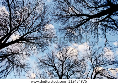 lighter silhouette of tree branches shot from below angle - stock photo