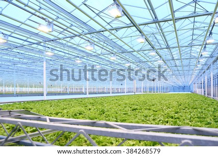 Lighting of green salad growing in greenhouse