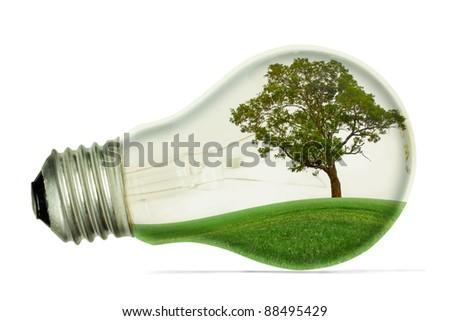 Lighting the trees. - stock photo