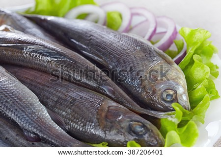 Lightly salted grayling on a white plate - stock photo