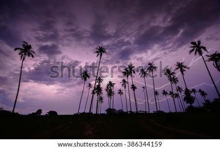 Lightning strike on the dark cloudy sky in coconut garden  - stock photo