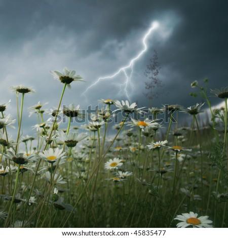 Lightning strike over daisy field. - stock photo