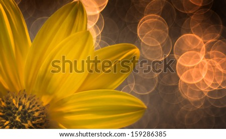 lights and flowers - stock photo